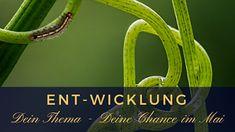 LichtRaum Wettengel: ENT-WICKLUNG - Dein Thema, Deine Chance im Mai Caterpillar, Healing, Training