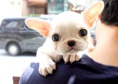 Frenchie! Dying !!!!!! I want him @Kaitlyn Marie Armstrong Yelle