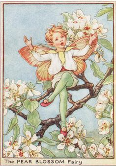 Flower Fairies: The PEAR BLOSSOM FAIRY Vintage Print c1930 by Cicely Mary Barker