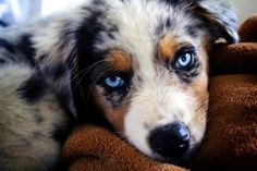 Puppies with blue eyes<3