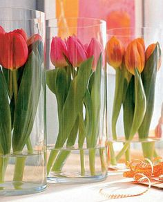 tulips in clear vases