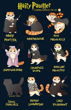 Waffles the Cat: Harry Potter. Do I put this on my Harry Potter board, cat board or funny board? Memes Do Harry Potter, Arte Do Harry Potter, Cute Harry Potter, Harry Potter Characters, Harry Potter Fandom, Harry Potter World, Pusheen Harry Potter, Harry Potter Cards, Harry Potter Poster