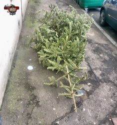 #tree #discarded #christmastree  #tph_75 #tph_75_dapperdavid1971 Photos from my travels