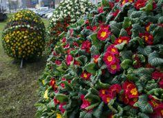 #Gliwice #kwiaty #wiosna #Easter