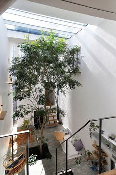 """A house with a """"square"""" that feels nature indoors living with trees – Nature Beauties Interior Garden, Interior Plants, Interior And Exterior, Green Architecture, Japanese Architecture, Architecture Design, Indoor Trees, Vintage Stil, Vintage Modern"""