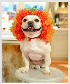 Send in the Frenchie Clown