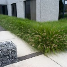 pennisetum alopecuroides 'hameln' garden design with boxwood border Landscape Borders, Landscape Design, Modern Landscaping, Front Yard Landscaping, Outdoor Plants, Outdoor Gardens, Modern Garden Design, Ornamental Grasses, Garden Spaces