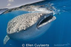 Great encounters this year in Isla Mujeres, less animals ... by Ellen Cuylaerts