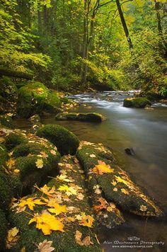 Whatcom Creek in fall, Bellingham, Washington.