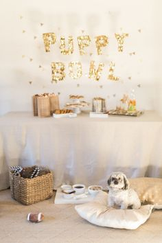 Everyone will love the Puppy Bowl party! http://www.stylemepretty.com/living/2015/01/27/puppy-bowl/ | Photography: Ruth Eileen - http://rutheileenphotography.com/