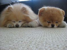 boo and buddy sleeping