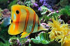 Tanked shaq grouper dating