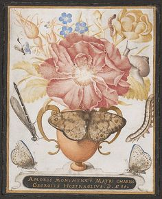 Still Life with Flowers, a Snail and Insects (1589); Joris Hoefnagel  (Netherlandish, 1542–1601); Watercolor, gouache, and shell gold on vellum; Metropolitan Museum of Art, New York