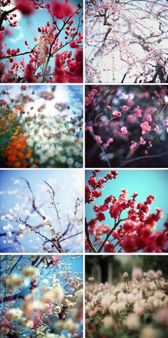 Appreciate the beauty of cherry blossoms Exotic Flowers, Love Flowers, Beautiful Flowers, Cherry Blooms, Cherry Tree, Kodak Moment, Floral Sleeve, Design Seeds, Garden Trees