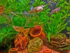 HDR  My Tiny Tank by MeAmore5, via Flickr