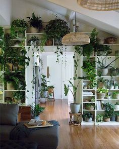 Living Room Decoration With Plants Ideas You'll Like; Living Room Decoration With Plants; Plants In Living Room; Living Room With Plants Deocr; House Plants Decor, Living Room Plants Decor, Bedroom With Plants, Plant Rooms, Indoor Plant Decor, Plant Wall Decor, Wall Of Plants Indoor, Green Living Room Walls, Indoor Plant Shelves