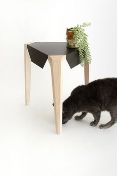 Equil table and ... cat!