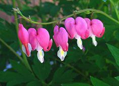 Best Perennials for Northern Gardens