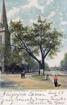 The Washington Elm near the Cambridge Common - it used to stand near the intersection of Mason and Garden Streets.