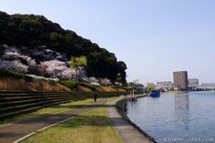 So close to Kyoto: Otsu City (Shiga Prefecture) is so lovely in spring. ^_^