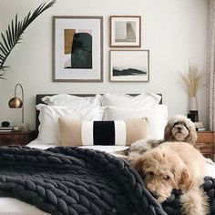 Declutter And Style And Design For Put Up-Spring Crack Homeschool Good Results Leaving Bed On A Monday Is Hard Enough - Without Being On The Receiving End Of Puppy Dog Eyes - Apartmenttherapy Bedroom Inspo, Home Bedroom, Modern Bedroom, Master Bedroom, Bedroom Decor, Bedroom Furniture, Furniture Ideas, Bedroom Ideas, Bedrooms