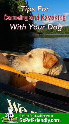 Mesmerizing Training Your Dog Proven, Useful Hints And Tips Ideas. Remarkable Training Your Dog Proven, Useful Hints And Tips Ideas. Dog Training Techniques, Dog Training Tips, Training Schedule, Hiking Training, Potty Training, Leash Training, Training Collar, Training Equipment, Kayaking With Dogs