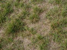 lawn-patches-reseeding.JPG