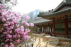 Deoksu Palace Opens Special Spring Tour Program   Koogle TV