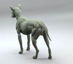 ArtStation - Canine Anatomy Study, steve lord