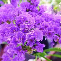 【kyoto_flowerhouse_omuro】さんのInstagramをピンしています。 《【メディアで話題の京都老舗花屋】 お誕生日を迎えられた皆様、おめでとうございます。 11月17日の誕生花は【スターチス】です。花言葉は『変わらぬ心・途絶えぬ記憶』などです。  京都花室 おむろでは、 #桜盆栽 など、たくさんのフラワーギフトを販売しております。詳しくはウェブをご覧ください。検索:【おむろ】  #京都花室おむろ #おむろ #花 #誕生花 #胡蝶蘭 #蘭 #桜 #盆栽 #御室桜 #祝 #誕生日プレゼント #誕生日おめでとう #仁和寺 #御室仁和寺 #omuro #flower #birthdayflowers #orchid #sakura #cherryblossom #bonsai #omurosakura #anniversary #birthdaypresent #japan #ninnaji #omuroninnajistation》
