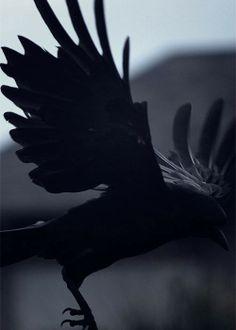 as the crow flies.