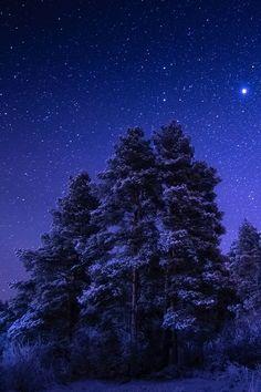 porcvpine:  Under The Starry Sky   Joni Niemela