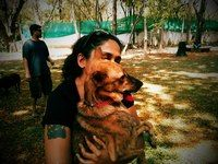 Naughty Naaty: Sindhoor - Citizen Matters, Bangalore News. An article on our very own Indian Aboriginal dogs, also known as Naaty or INDog, or Pariah or Pye dog.