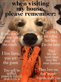 Best off not even coming over if don't love dogs! All dogs are more precious than words can say Cute Puppies, Cute Dogs, Dogs And Puppies, Doggies, Funny Dogs, Funny Animals, Cute Animals, I Love Dogs, Puppy Love