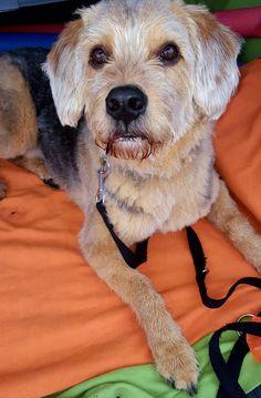 Hunde Foto: Jasmine und Malik - Relaxen am See Hier Dein Bild hochladen: http://ichliebehunde.com/hund-des-tages  #hund #hunde #hundebild #hundebilder #dog #dogs #dogfun  #dogpic #dogpictures