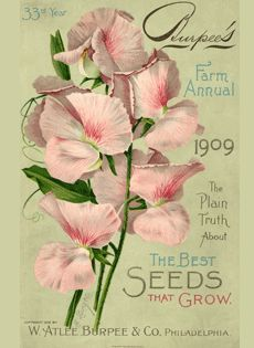 Front cover, image of flowers. Burpee's Farm Annual, 1909