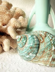 seashells ~ love the color combination