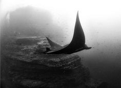 Anuar Patjane shoots incredible black and white images of life beneath the sea, bringing you into a world few of us ever see. Artistic Photography, Wildlife Photography, Amazing Photography, Art Photography, Beneath The Sea, Under The Sea, Black N White Images, Black And White, Space Wolves