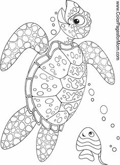 40 Best Turtle Coloring Pages Images Coloring Pages
