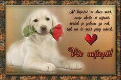 Labrador Retriever, Quotes, Facebook, Sweet, Labrador Retrievers, Quotations, Candy, Labrador, Quote