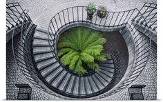 Elephant fern inside circular stairwell