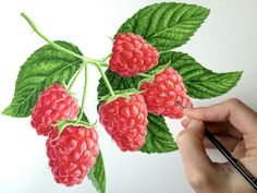 Raspberrries - Anna's paintings - Watercolours With WOW