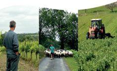 <p>Année après année, l'agriculture biologique ne cesse de gagner du terrain sur notre territoire : en 2013, les surfaces certifiées bio avaient fait un bond de 9% pour atteindre plus de 930 000 hectares en France. De m&ec