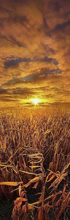 amazing SUNSET shot !!   #Photo by Phil Koch -- pixels.com