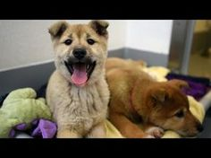 Dogs Rescued from South Korea Dog Meat Farm Now Safe in California : Humane Society International