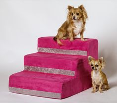 Mia and Mela with Las Vegas Pink Steps by Lola Santoro Pet Accessories