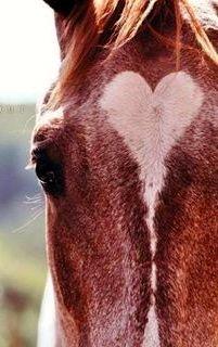 I Heart You Horse