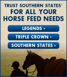 Horse Training Tips: Selecting the Right Bit for Your Horse - Southern States Cooperative
