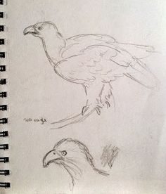 Sea Eagle at Blair Drummond Safari Park Sketchbook Drawings, Sketching, Observational Drawing, Draw Animals, Safari, Charcoal, Eagle, Animation, Sea