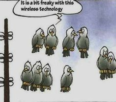 Birds and technology... #humor